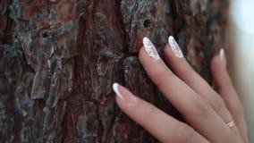 La ragazza conduce la sua mano lungo la corteccia di un albero, primo piano, movimento lento video d archivio