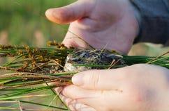 La ragazza conserva l'uccellino implume caduto dal nido immagine stock