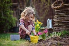 La ragazza del bello bambino nei giochi del giardino di primavera ed il giacinto di piantatura fiorisce immagini stock