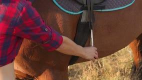 La ragazza del primo piano mette il piede nella staffa sul cavallo video d archivio