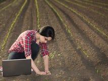 La ragazza dell'agricoltore su cereale germoglia il campo Immagini Stock Libere da Diritti