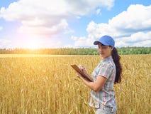 La ragazza dell'agricoltore in una camicia di plaid ha controllato il suo grano del campo Immagini Stock Libere da Diritti