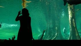 La ragazza divertente in oceanarium gode del nuoto del pesce nello stagno grande con la parete di vetro archivi video