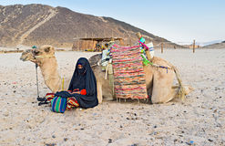 La ragazza ed il cammello Fotografie Stock