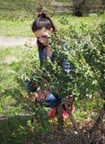 La ragazza in giardino pulisce il cespuglio immagine stock