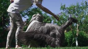 La ragazza gioca con il suo cane all'iarda video d archivio