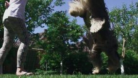 La ragazza gioca con il suo cane all'iarda stock footage