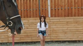 La ragazza graziosa cammina al cavallo sull'arena lentamente stock footage