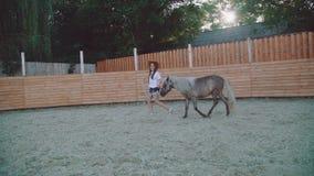La ragazza graziosa cammina con un bello cavallino sull'arena 4K archivi video