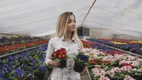 La ragazza graziosa cammina, guarda e sceglie i vasi da fiori in serra 4K archivi video