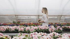 La ragazza graziosa cammina, guarda e sceglie i vasi da fiori in serra 4K stock footage