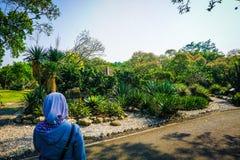 La ragazza nel velo vede un bello parco del giardino del cactus dal lato della strada - foto fotografia stock libera da diritti