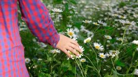 La ragazza nella camminata a quadretti della camicia ed in camomilla commovente fiorisce con timore, vista posteriore archivi video