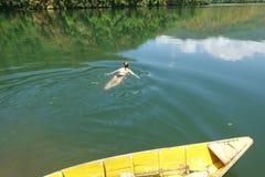 La ragazza nuota nel lago Immagini Stock Libere da Diritti