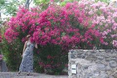 La ragazza odora gli ischi Italia di una buganvillea del fiore Immagini Stock