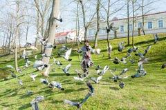 La ragazza passa una moltitudine di piccioni Fotografia Stock