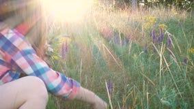 La ragazza raccoglie i fiori del salvia stock footage