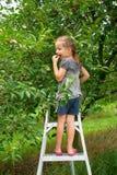 La ragazza raccoglie la ciliegia in un giardino della ciliegia Fotografia Stock Libera da Diritti