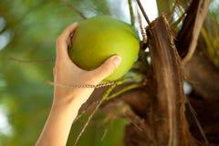 La ragazza rompe una noce di cocco Immagine Stock Libera da Diritti