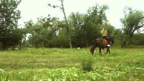 La ragazza scarna salta su un grande cavallo marrone sulla natura stock footage