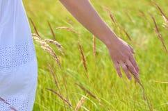 La ragazza segna i coni del campo delle piante Il concetto di unità con la natura e di preoccuparsi per il mondo immagine stock