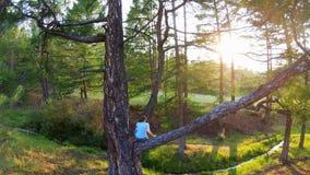 La ragazza si siede su un ramo di albero ed ammira il tramonto video d archivio