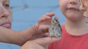 La ragazza snella con i bambini ha preso il pulcino del passero e lo ha esaminato in lei armi archivi video