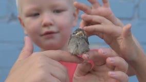 La ragazza snella con i bambini ha preso il pulcino del passero e lo ha esaminato in lei armi stock footage