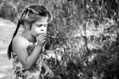 La ragazza soffia il dente di leone Fotografie Stock
