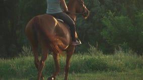 La ragazza sta montando un cavallo stock footage