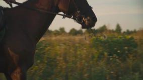 La ragazza sta montando un cavallo video d archivio