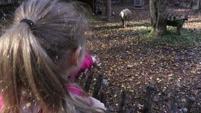 La ragazza sta provando ad alimentare le pecore stock footage