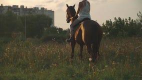 La ragazza sta sedendosi su un cavallo stock footage