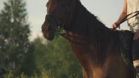 La ragazza sta sedendosi su un cavallo video d archivio