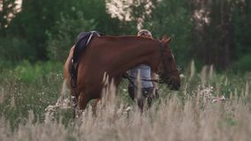 La ragazza sta tenendo il cavallo per le redini video d archivio
