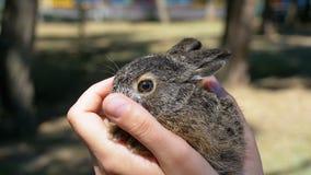 La ragazza sta tenendo un piccolo coniglietto lanuginoso selvaggio del bambino Poco coniglietto nella palma Movimento lento archivi video