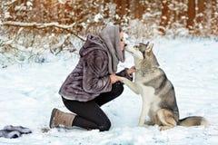 La ragazza sveglia in cappotto grigio bacia il cane del husky sui precedenti del fotografia stock libera da diritti