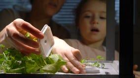 La ragazza sveglia del bambino aiuta sua madre a preoccuparsi per le piante stock footage