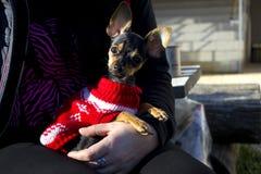 La ragazza tiene un piccolo cane Ragazza sui giochi della natura con un piccolo cane domestico immagini stock libere da diritti