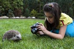La ragazza vuole prendere un'immagine dell'istrice Fotografie Stock Libere da Diritti