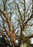 La rama, árbol, árbol grande, troncos, se va fotos de archivo