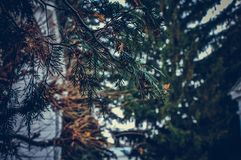 La rama comió cerca imagenes de archivo