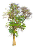 La rama de árbol Fotos de archivo