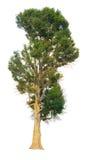 La rama de árbol Imagen de archivo libre de regalías