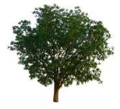 La rama de árbol Imagen de archivo