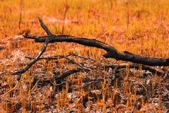 La rama de árbol carbonizada en la tierra con la hierba joven teñió la naranja Imágenes de archivo libres de regalías