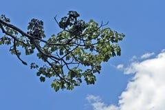 La rama de árbol con verde se va contra el cielo azul Foto de archivo libre de regalías