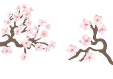 La rama de la cereza de Sakura Japón con la floración florece el ejemplo del vector libre illustration