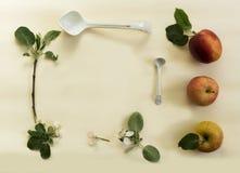 La rama de la manzana, las flores y la manzana cortada en un fondo blanco Visión desde arriba Imagen de archivo