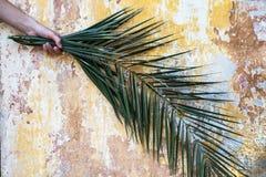La rama de la palma en mano de la mujer y viejo vintage hermoso agrietó dolor Imagenes de archivo